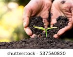 men hand are planting the... | Shutterstock . vector #537560830