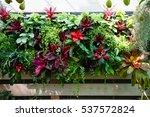 vertical garden by bromeliad...   Shutterstock . vector #537572824
