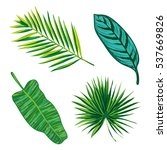 tropical leaves collection.... | Shutterstock .eps vector #537669826