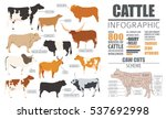 cattle breeding farming... | Shutterstock .eps vector #537692998