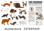 fur farming infographic... | Shutterstock .eps vector #537695449