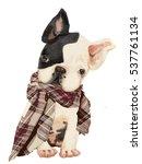 little cute sitting bulldog... | Shutterstock . vector #537761134