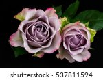 close up of bouquet pastel rose.... | Shutterstock . vector #537811594