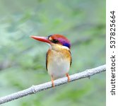 Small photo of The Oriental Dwarf Kingfisher also known as the Black-backed Kingfisher or Three-toed Kingfisher (Ceyx erithaca) is a species of bird in the Alcedinidae family. it is found in Thailand