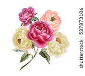 watercolor peony bouquet of... | Shutterstock . vector #537873106
