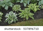 Early Summer Border With Hosta...