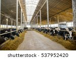 Modern Farm Cowshed With...