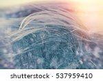 silky grass  beautiful nature   ... | Shutterstock . vector #537959410