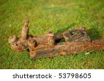 Rusty Trailer On Grass With...