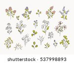vintage floral and herbal set.... | Shutterstock .eps vector #537998893