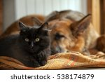 Stock photo black cat and sleeping dog cat and a sleep german shepherd 538174879