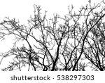 realistic tree branches...   Shutterstock .eps vector #538297303