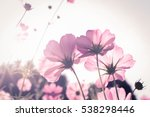 cosmos flower on blue natural... | Shutterstock . vector #538298446