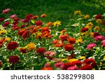 colorful flowers bed   Shutterstock . vector #538299808