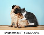 Stock photo adorable pug and cute cat sitting together on floor 538300048