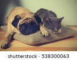 Stock photo adorable pug and cute cat lying together on pillow 538300063