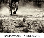 Horses Hooves Kick Up Dust As...