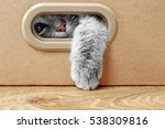 Stock photo cute cat in cardboard box 538309816