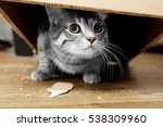 Stock photo cute cat under cardboard box 538309960