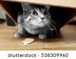 Cute Cat Under Cardboard Box