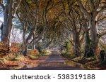 tunnel like avenue of... | Shutterstock . vector #538319188