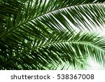 palm tree background | Shutterstock . vector #538367008