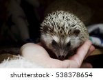 Small And Cute Hedgehog Is...