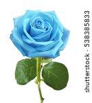 Blue Rose Isolated On White...