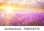 lavender bushes closeup on... | Shutterstock . vector #538426570