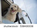 brown poodle dog standing on... | Shutterstock . vector #538430338