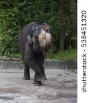 Small photo of Indian elephant Indian elephant â?? an animal is very agile and extremely able. Animals live in the tropical and deciduous forests.
