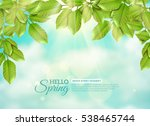 green branches of deciduous... | Shutterstock . vector #538465744