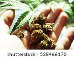 marijuana with buds in hand... | Shutterstock . vector #538466170