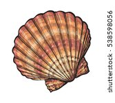 colorful scallop sea shell ... | Shutterstock .eps vector #538598056