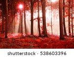autumn forest | Shutterstock . vector #538603396