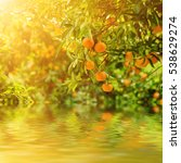 tangerine sunny garden with... | Shutterstock . vector #538629274