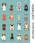 small dog breed collection | Shutterstock .eps vector #538738900
