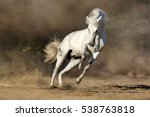 White Horse Run Free In Desert...