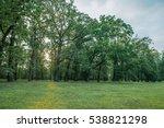 Park In Summer. Tree  Green...