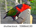 black capped lory  lorius lory... | Shutterstock . vector #538866130