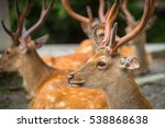 Deers Portrait