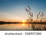 silhouette of grass flower on... | Shutterstock . vector #538907380