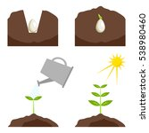 the phases of plant growth ... | Shutterstock .eps vector #538980460