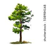 Pine Tree On A White Backgroun...