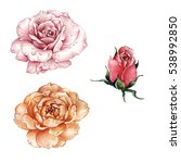 wildflower rose flower in a... | Shutterstock . vector #538992850