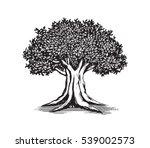 oak tree vector logo...   Shutterstock .eps vector #539002573