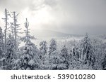 Winterland In Harz Mountains