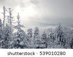Winterland In Harz Mountains
