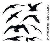 set of black vector flying... | Shutterstock .eps vector #539063350