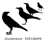 Crows Silhouette Set   Vector